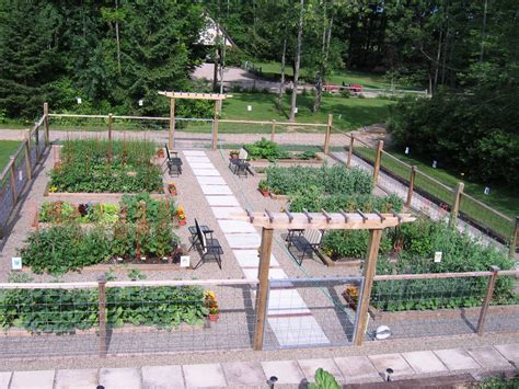 tomatoes  evolution   garden