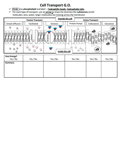 printables cell transport worksheet lemonlilyfestival