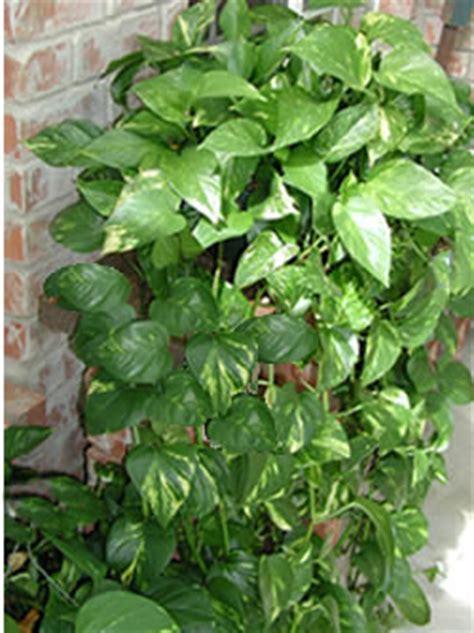 common house plants problems field trip indoor poisonous plants