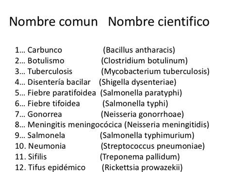 preguntas cientificas comunes taxonom 237 a y nomenclatura bacteriana
