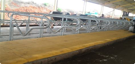 Pasture Mats by Pasture Mat For Bull And Welcome To Alphashalom Inc