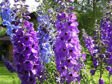 produce fiori in spighe il giardino sfumato spighe di fiori