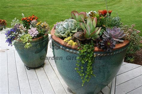planters for succulents companion plants in succulent planters