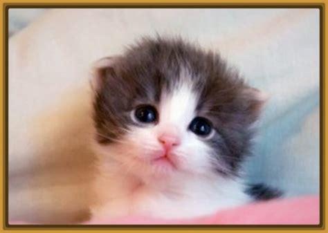 imagenes tiernas gatitos bebes gatos bebes tiernos blancos