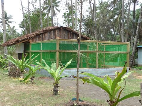Build Floor Plans Online For Free by How To Build Low Cost Poultry House For Rural Poultry Farms