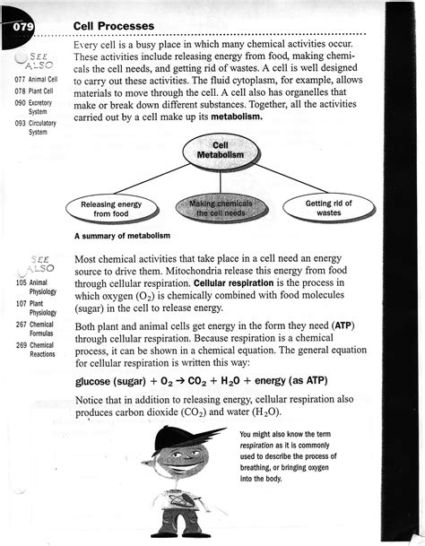 cell theory worksheet middle school photosynthesis and cellular respiration activities high school energy and