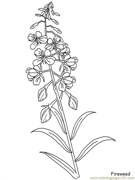 Realistic Flowers Coloring Page Free Realistic Flowers Realistic Flower Coloring Pages