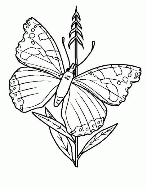 butterfly coloring pages coloringpages1001 com