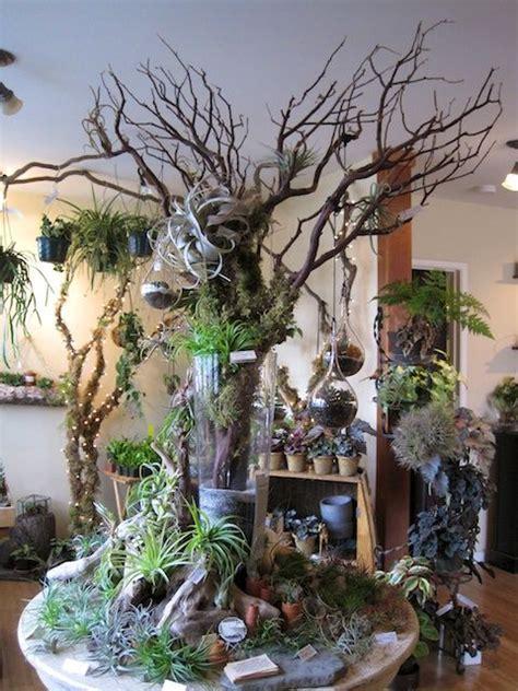 tillandsia table   grow  tree guest book