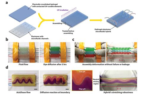 lab on a chip template tough new hydrogel hybrid doesn t out mit news