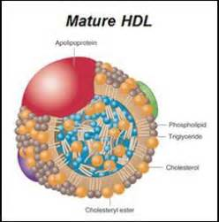 healthy fats hdl part 4 cholesterol isn t cholesterol cholesterol