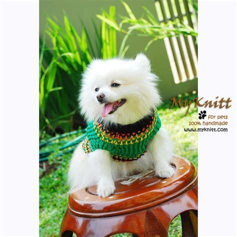 alaskan husky pomeranian 17 best images about pomeranian husky on puppy mix pomeranian husky and