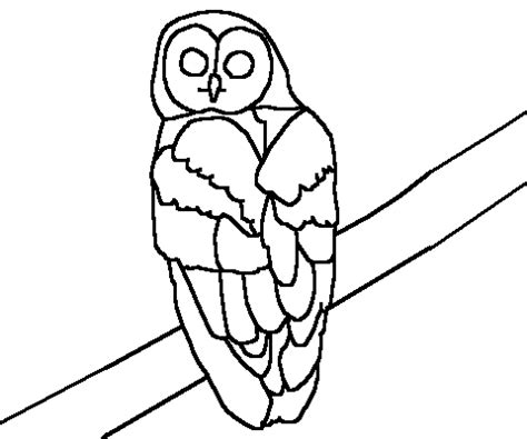 spotted owl coloring page northern spotted owl coloring page
