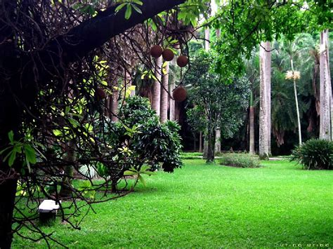 imagenes de jardines en venezuela paisaje bitacora v encuentro de jardines botanicos