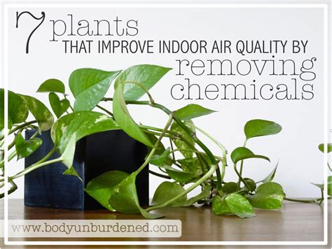 best houseplants for air quality image gallery indoor plants air quality
