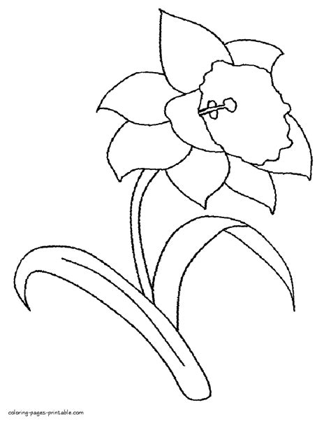 coloring pages daffodil flowers flower of daffodil coloring pages free coloring book picture