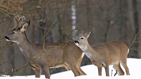 Fuchsbau Im Garten Was Tun