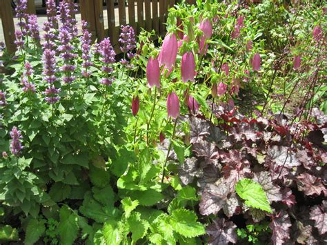 home joys frugal gardening tip 4 plant perennials