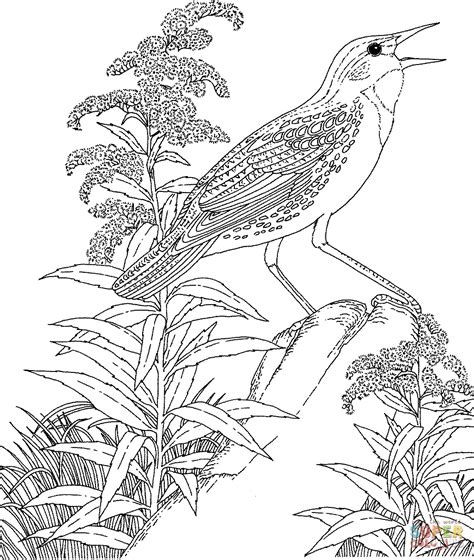 coloring pages of state birds and flowers birds and flowers coloring pages coloring pages