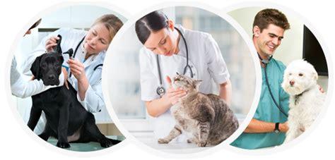 veterinary insurance veterinarian insurance allen financial insurance
