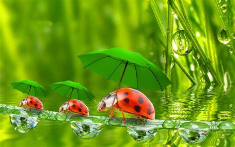 imagenes de lady bug para fondo de pantalla funny ladybugs fondos de pantalla gratis para widescreen