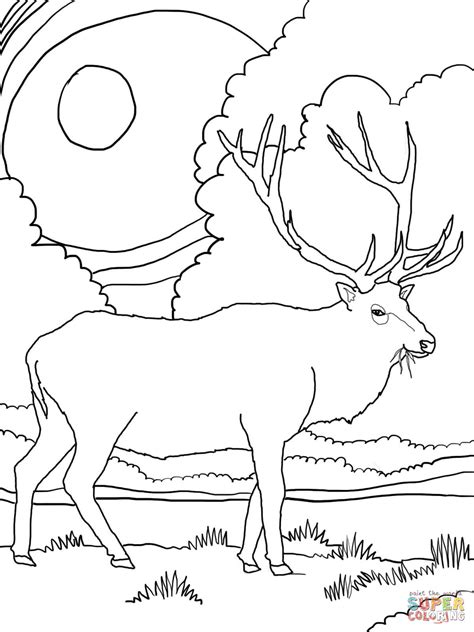 rocky mountain elk coloring page free printable coloring