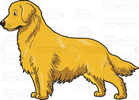 golden retriever clip an adorable golden retriever clipart vector