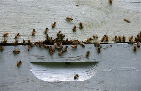 bees in house siding bees buzzing around your home you may need new siding innovations siding windows