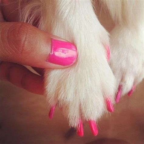 painting dogs nails 17 best images about puppy nail on nail my nails and for dogs