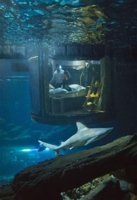 underwater bedroom aquarium s underwater bedroom
