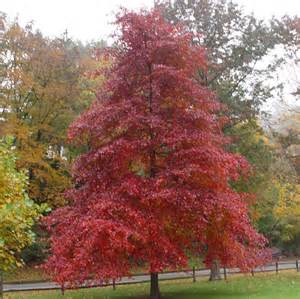 gardening how to help a new tree thrive and develop