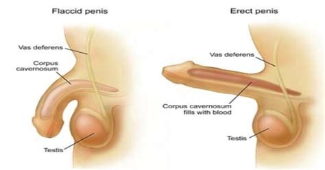 how to a penis exercises against erectile dysfunction erectile dysfunction treatment natural remedies 2014