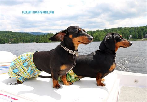 why are they called dogs dachshund firefighter truck crusoe and oakley s drills
