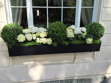 white window flower boxes window boxes knightsbridge