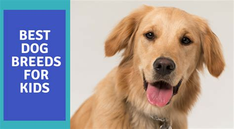 best for families what are the best breeds for kid s pet club