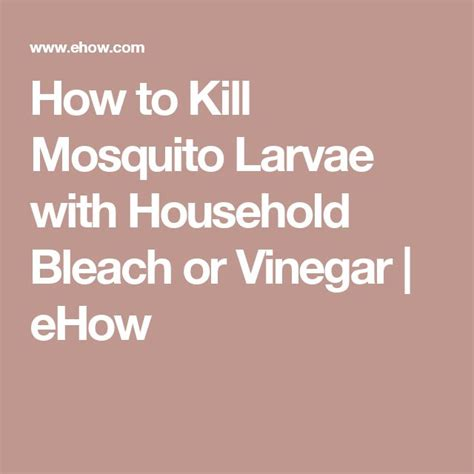 how to kill mosquitoes in home best 25 how to kill mosquitoes ideas on pinterest