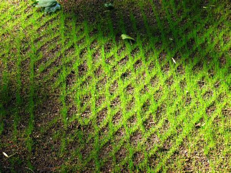 Slit Sweeter Premium slitseeding nutri lawn