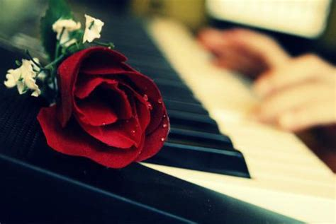 Blue Rose Piano Wallpaper