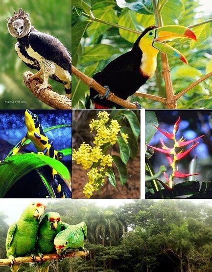 imagenes de animales y plantas de brasil fauna y flora pma507pty panam 193 blog