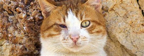 was tun wenn die katze in die wohnung pinkelt wenn die katze erblindet tipps zum umgang mit ihr