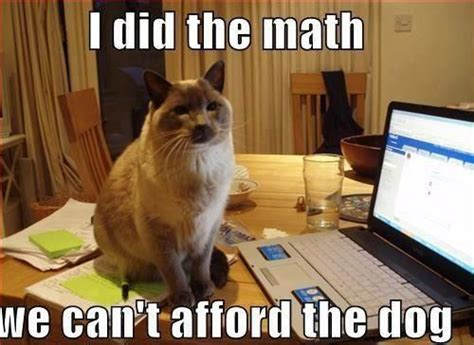 Accountant Dog Meme - 32 of the best funny cat memes pinterest humor
