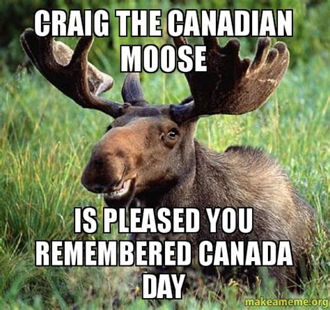 Canadian Moose Meme - craig the canadian moose is pleased you remembered canada