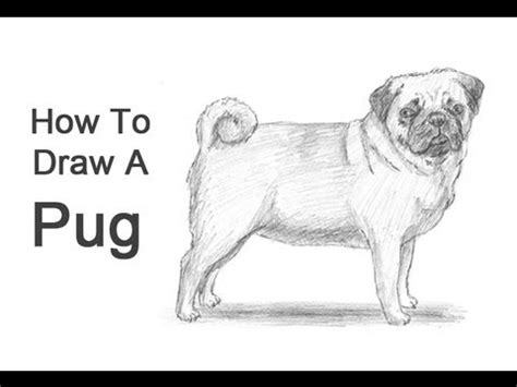how to draw a pug for how to draw pug