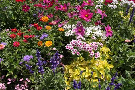 perennial flower garden ideas photograph choosing and plan