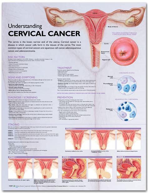 cervical cancer diagram anatomy chart understanding cervical chart
