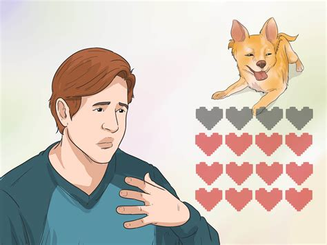 how to take care of a chihuahua puppy how to take care of a teacup chihuahua with pictures wikihow