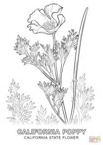 coloring pictures of state flowers california state flower coloring page free printable