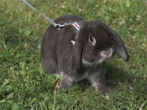coniglio da appartamento conigli in casa o egoismo dell uomo eticamente