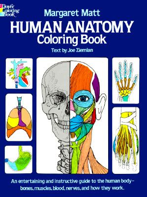 anatomy coloring book half price books human anatomy coloring book book by margaret matt joe