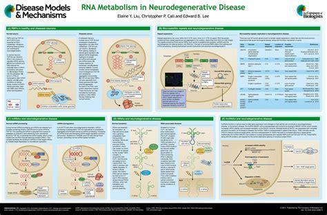Disease Models And Mechanisms